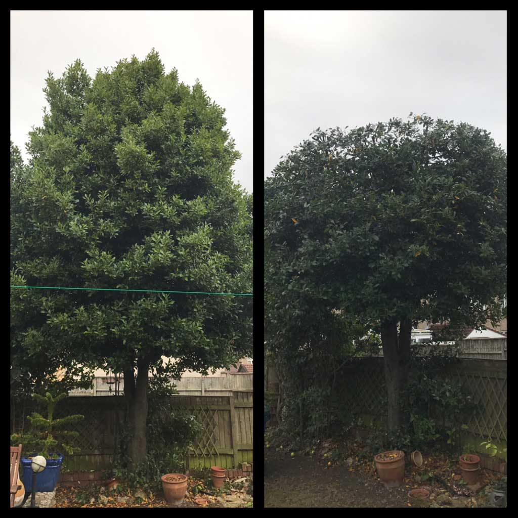 Bay Tree Reduction