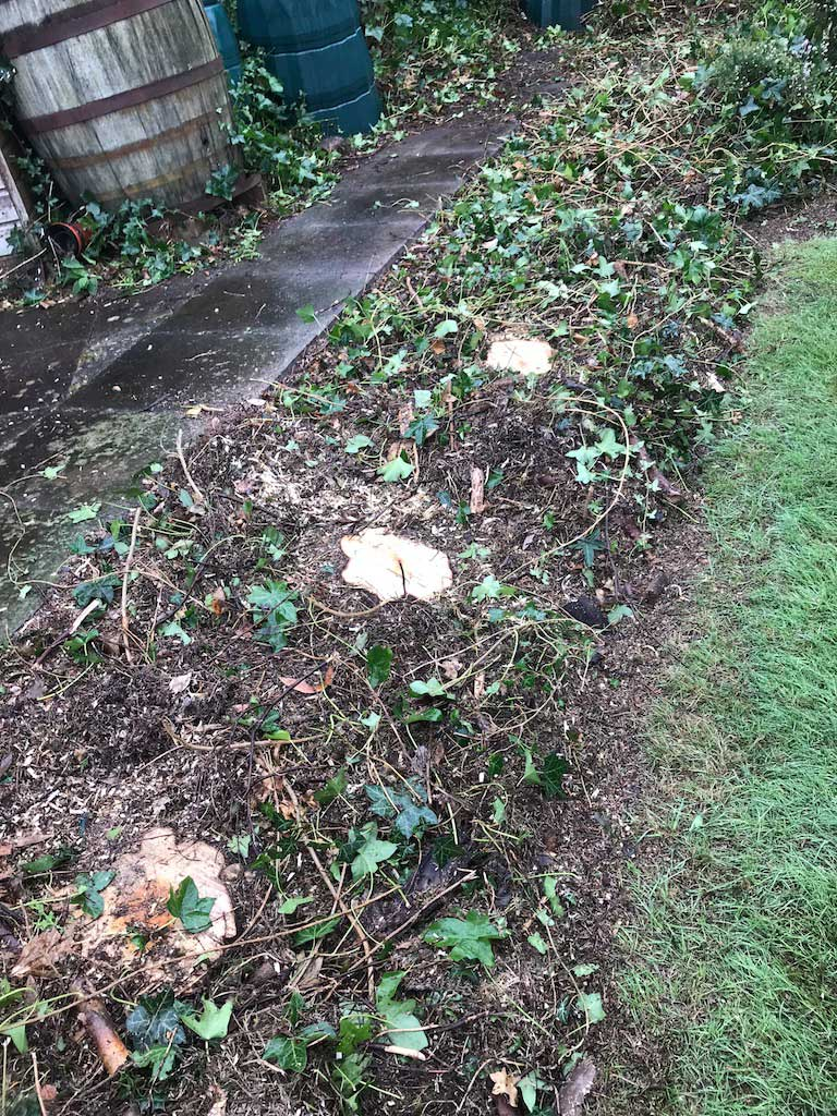 Stump Grinding Before